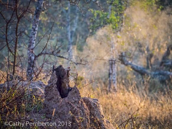 Active termite mound.